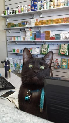 Our Caturday feline of the week is Alf, manager of the Ryde Veterinary Clinic in…