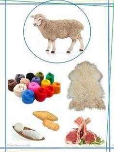 Learn Turkish, Farm Projects, Montessori Materials, Learning Environments, Preschool Activities, Farm Animals, Back To School, Art Drawings, Kindergarten