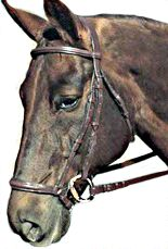 ::: Sustainable Dressage - Tack & Auxillary Equipment - The Bridle & the Bit :::