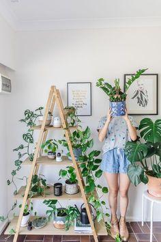Beltéri Szobanövények kalauz - Kezdő növények nem tudja megölni 1