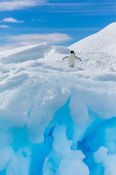Penguin frolicking in Antarctica. Image by Patrick J Endres - AlaskaPhotoGraphics / Getty Images Penguin Love, Cute Penguins, Penguin Craft, Alaska, Winter Photos, Winter Scenes, Snow Scenes, Hot Days, Spirit Animal