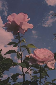 Pin by cici on iphone wallpaper in 2019 Flor Iphone Wallpaper, Rose Wallpaper, Cute Wallpaper Backgrounds, Pink Clouds Wallpaper, Wallpaper Wedding, Blog Backgrounds, Disney Wallpaper, Aesthetic Roses, Sky Aesthetic