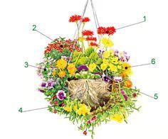 Hängepflanzen in der Blumenampel, Pflanzanleitung   Blumenampel ...