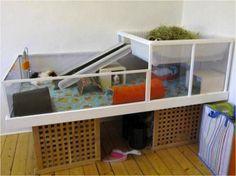 Great Ideas For Your Guinea Pig! | 2pawsupinc.com Pet Sitting, Dog ...