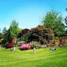 #park #lawn at #hevercastle #hever #castle #kent #england #britain #uk