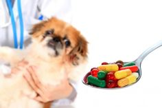 OTC human medications that can be given to dogs and dosage information.