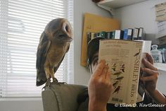 callmeadrian:    heymanniceshot:    hirondelles:    allcreatures:    jhulyjohns:    Sarah loves to look at stuff. Here Rob is showing her a birdbook. She was turning her head here and there…looking at the pages. (via wildorcaimages)