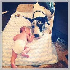 Baby's best friend Great Dane