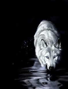 wolf water reflection