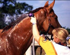 Basics of Bathing Your Horse. You can use this A-circuit groom's bathing technique to leave your horse with a glistening coat--and both of you feeling good. Horse Care Tips, Summer Jobs, Horse Grooming, Horse Stables, Show Horses, Four Legged, Farm Life, Circuit, Bathing