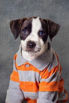 La original ayuda de una fotógrafa para que se adopte perros abandonados Tammy Swarek ha iniciado un proyecto que busca presentar de una forma distinta distintos ejemplares de canes