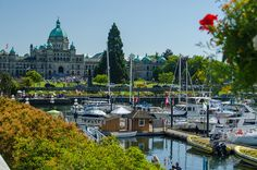 Enjoying a weekend trip to Victoria, British Columbia& capital city on Vancouver Island. Here are some of the top things to do in Victoria, BC Weekend Trips, Weekend Getaways, Seattle Vacation, Victoria British Columbia, Orcas Island, Alaskan Cruise, Beach Town, Oregon Coast, Vancouver Island