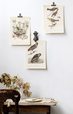 vintage set of three botanical illustration of birds