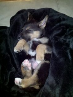 The next dog we're getting and the name will be...Rio :)