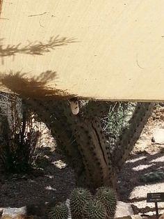 Wild Honeybee Comb Desert Botanical Garden Phoenix, Botanical Gardens