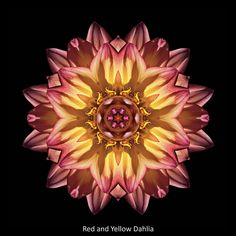 ILLUMINATION: Find balance, build resilience, and expand your heart as you find your own path to wholeness, aided by this stunning blend of award-winning images, inspirational quotations, and potent reflections on our amazing human experience. © David J. Bookbinder #pathstowholeness #flowermandalas #flowermandala #flowers #flower #mandala #mandalas #spiritual #selfhelp #illumination