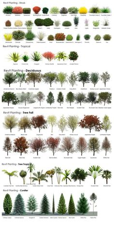 A tree and shrub guide / infographic: evergreens, deciduous and tropicals. Such a cool tool! Created by a member of RevitCity. #LandscapeFrontYard