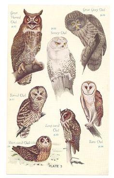 I love owls <3