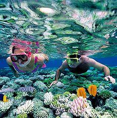 ¿Crees que lo has visto todo? Bajo el manto del #MarCaribe se esconde una verdadera acuarela de colores. Nada como #bucear sobre el Gran Arrecife Maya y admirar la vida que bajo el agua se desenvuelve.