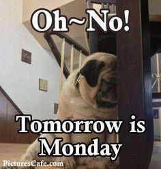 Oh No! Tomorrow is Monday :( funny quote monday tomorrow pug sad