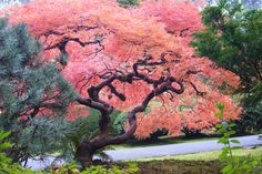 10 Best Public Gardens in the US: Japanese Garden in Portland, OR | Photo from 10Best.com