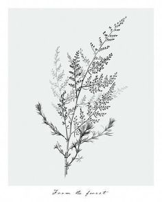 From the ForestBy Maria Mendez - Illustration & Design - Blumen Botanical Tattoo, Botanical Art, Botanical Illustration, Botanisches Tattoo, Mandala Tattoo, Tatoo Tree, Tatoo Floral, Plant Tattoo, Flower Doodles