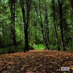 """Forest Stories"" The story behind this picture:  https://www.facebook.com/photo.php?fbid=507932889285275&set=a.507932875951943.1073741838.481203088624922&type=3&theater   #photography #fotografie #print #landschap #licht #bos #bomen #groen #bladeren #blad #herfst #wandeling #walk #flevoland #almere #natuur #decoratie #decoration #interieur #sfeer #perspex #poster #artprint #greetingcard #gift #kado #laaurelia #aurelia #iphoneonly #autumn #indiansummer #september #fall"