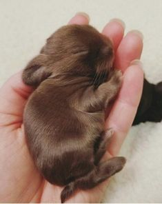 19 Super Tiny Bunnies That Will Melt The Frost Off Your Heart - Tiere - Animals Wild Cute Baby Bunnies, Baby Animals Super Cute, Cute Little Animals, Cute Funny Animals, Tiny Bunny, Tiny Baby Animals, Bunny Rabbit, Cutest Animals, Baby Animals Pictures