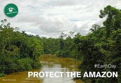 """169.2k Likes, 741 Comments - Leonardo DiCaprio (@leonardodicaprio) on Instagram: """"#Regram #RG @amazonwatch:  This #earthday, protect the Amazon rainforest with us!  If we hope to…"""""""