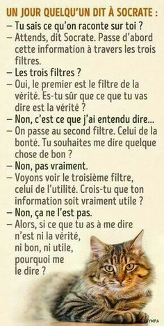 Quotes for Fun QUOTATION – Image : As the quote says – Description Les trois filtres de Socrate Sharing is love, sharing is everything Positive Attitude, Positive Quotes, French Quotes, French Phrases, Spanish Quotes, Psychology Facts, Positive Psychology, Some Words, Positive Affirmations