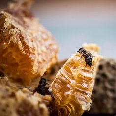 We serve the fresh honeycomb in our restaurant Babel. Save The Bees, Country Farm, Beekeeping, The Fresh, Honeycomb, South Africa, Organize, Insects, Art Ideas