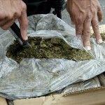 El narcotráfico en Paraguay produce unas 48.000 toneladas de marihuana al año