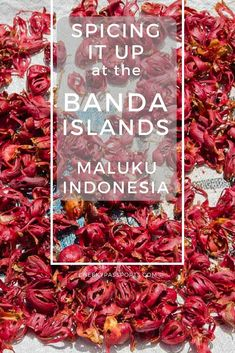 If you're looking for some charming and relatively undeveloped islands to get off the beaten path in Indonesia, consider heading to the Eastern side of the archipelago. Here, the beauty of the Banda Islands in the Maluku province, will make you wonder why people even bother to go to Bali! Read on to find out more. Travel Advice, Travel Tips, Travel Guides, Travel Plan, Maluku Islands, Adventures Abroad, Passport Travel, Gili Island, Us Road Trip
