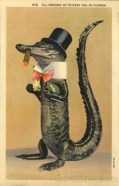 Scenic FL All dressed Up To Meet You In Florida - Alligator Alligator in a tuxedo smoking a cigar