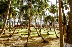 Andaman and Nicobar Islands by Sridharan S