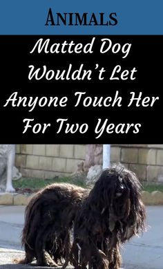 """Without getting into a spirited dogs vs. cats debate, dogs are arguably our greatest companions in life. We can honestly ask the question """"where would we be without dogs?"""" #MattedDog #Touch #TwoYears 1 Dollar Shop, Jupiter Planet, Oscar Fish, Office 365, Touching Herself, Paragliding, Helium Balloons, Crocodiles, Diy Carpet"""