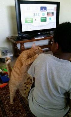 「ウィー」より「ワイ」に構ってくれと催促するネコが可愛いと話題に : 秒刊SUNDAY | 最新の面白ニュースサイト