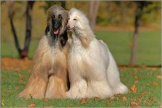 Looks like Kishma & Faust