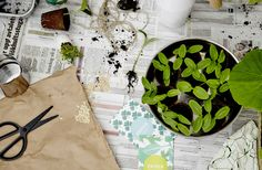 IKEA A pair of scissors, a paper bag, and a plant pot with seedlings and bags with different seeds.