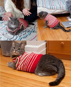 I may just be bold enough to try this with mine!  {sweater kitty} is there anything cuter?!