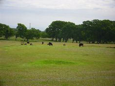 My home. Northern California-Tehama County-Alford Cattle Ranch