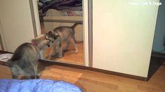 Cute Husky Puppy vs Mirror Cute Husky Puppies, Husky Puppy, Funny Animals, Mirror, Dogs, Mirrors, Pet Dogs, Husky Pups, Funny Animal