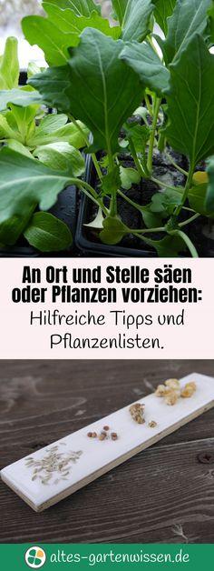 An Ort und Stelle säen oder Pflanzen vorziehen: Hilfreiche Tipps und Pflanzenlisten.   altes-gartenwissen.de #garten #nutzgarten #gemüse #vegetables