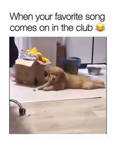 Funny animal videos with funny dogs.Kitten videos for kitty lovers.Every week new funny dog videos in amazing compilations.Check out our newest cat fails and Cute Funny Dogs, Funny Dog Memes, Funny Video Memes, Funny Animal Memes, Cute Funny Animals, Funny Animal Pictures, Cute Baby Animals, Funny Quotes, Dog Humor