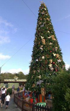 Christmas Tree at Animal Kingdom tami@goseemickey.com