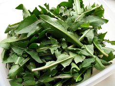 How to Use Wild Edible Plants and Herbs for Better Health and Cheaper Groceries