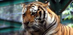 Durante todo o ano oferecemos desconto de 15% em cada entrada no Jardim Zoológico de Lisboa aos nossos hóspedes, com oferta do lanche na reserva do nosso programa ;)  #zoo #lisboa #açores