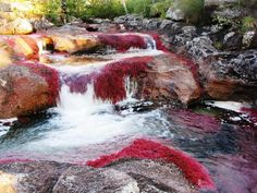 "Caño Cristales –This unique Colombian rainbow river is distinguishable from any other river on the planet because at certain seasons of the year it becomes tinted into different vibrant colors and looks absolutely unreal!  The head of the ""River of five colors"", as locals call it, is situated in the Serrania de la Macarena province of Meta. The river flows to the East till it runs into the Guayabero River. The five most typical colors of the Caño Cristales are red, green, yellow, green and…"