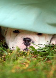 This is how I diet, I hide from food!