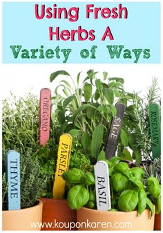 Using Fresh Herbs In A Variety of Ways | http://www.kouponkaren.com/2014/06/using-fresh-herbs-variety-ways/